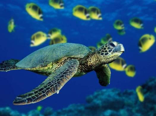 sea turtle donation csf concept
