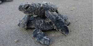 Turtle freedom