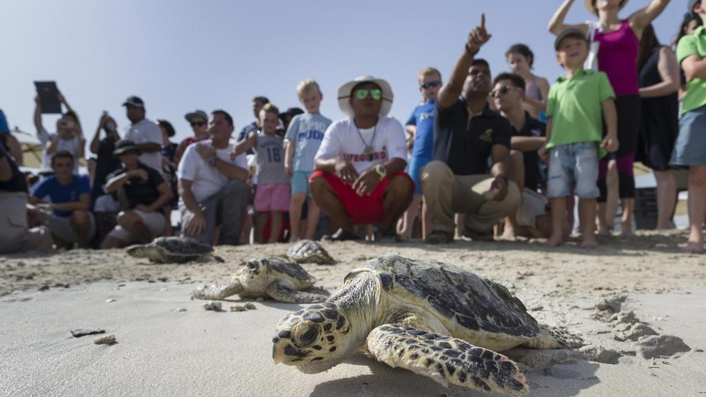 release-of-the-turtles-canary-islands